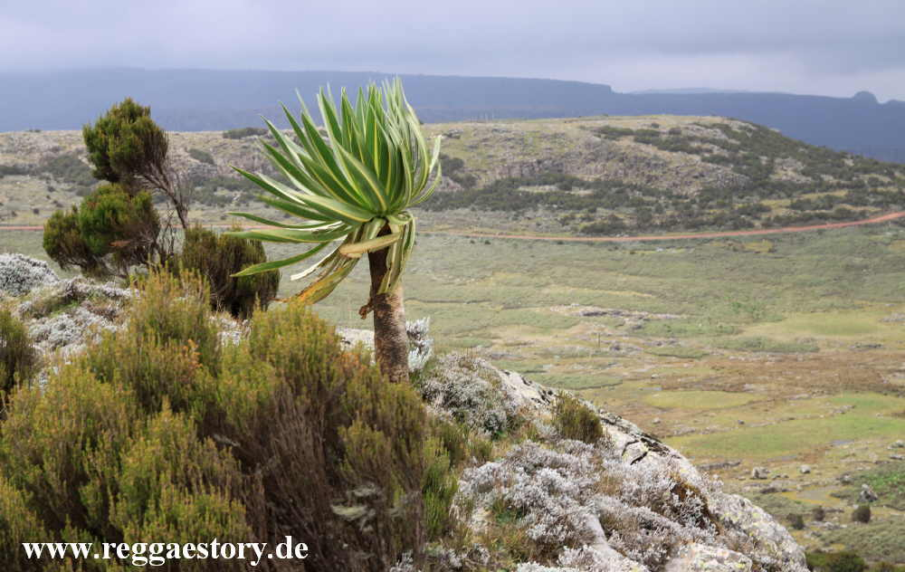 Ethiopia - Bale Mountains