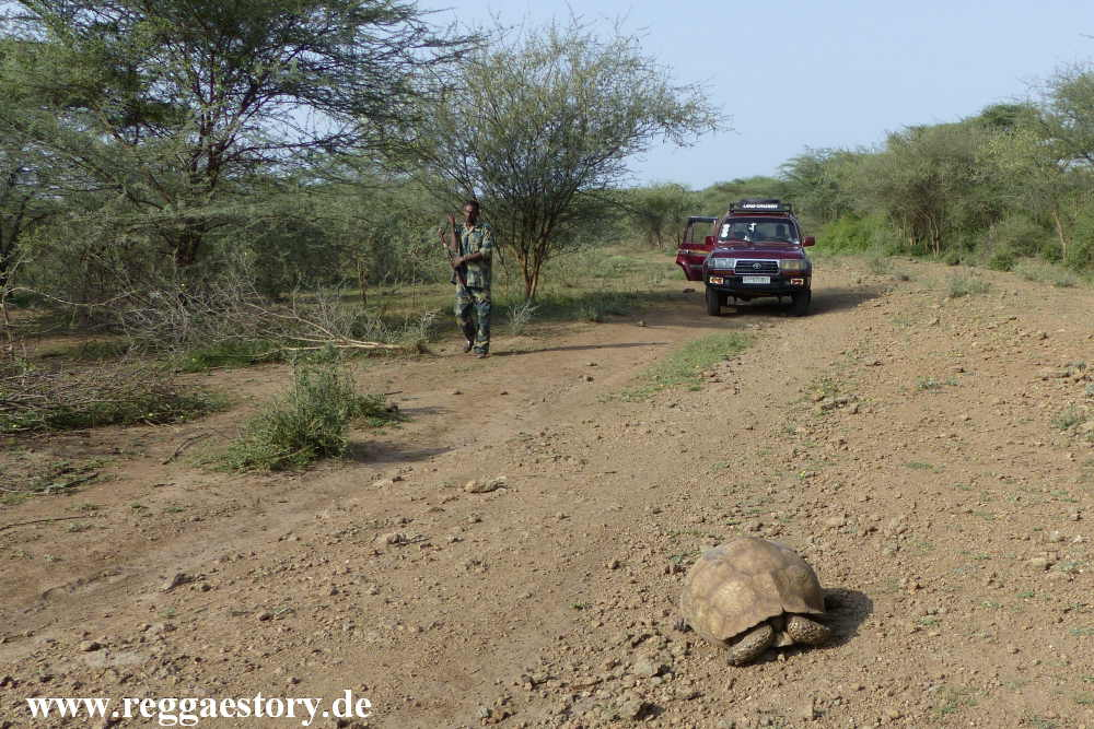 Ethiopia - Awash Nationalpark - Turtle