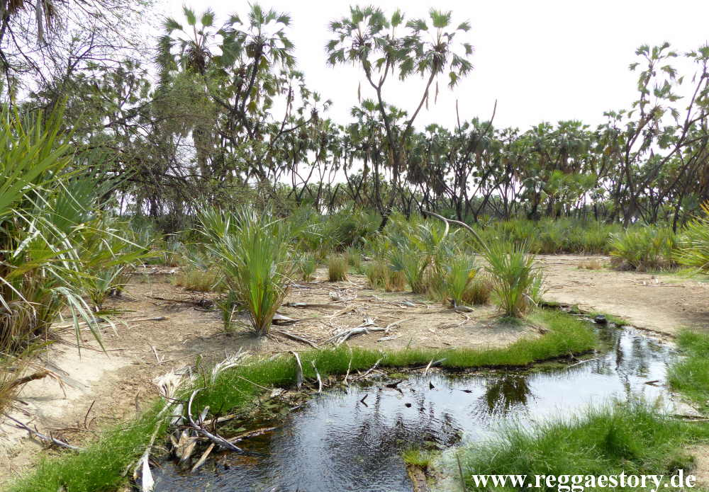 Ethiopia - Awash Nationalpark - Filwoha Hot Springs