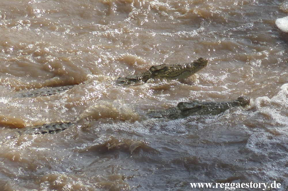 Ethiopia - Awash Nationalpark - Awash Falls - Krokodile